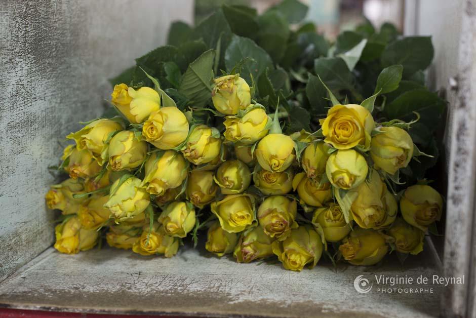 ferme-roses-colombie-virginiedereynal-18