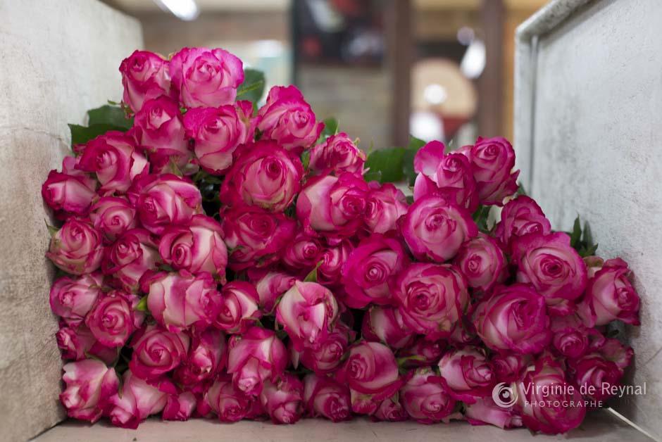 ferme-roses-colombie-virginiedereynal-19
